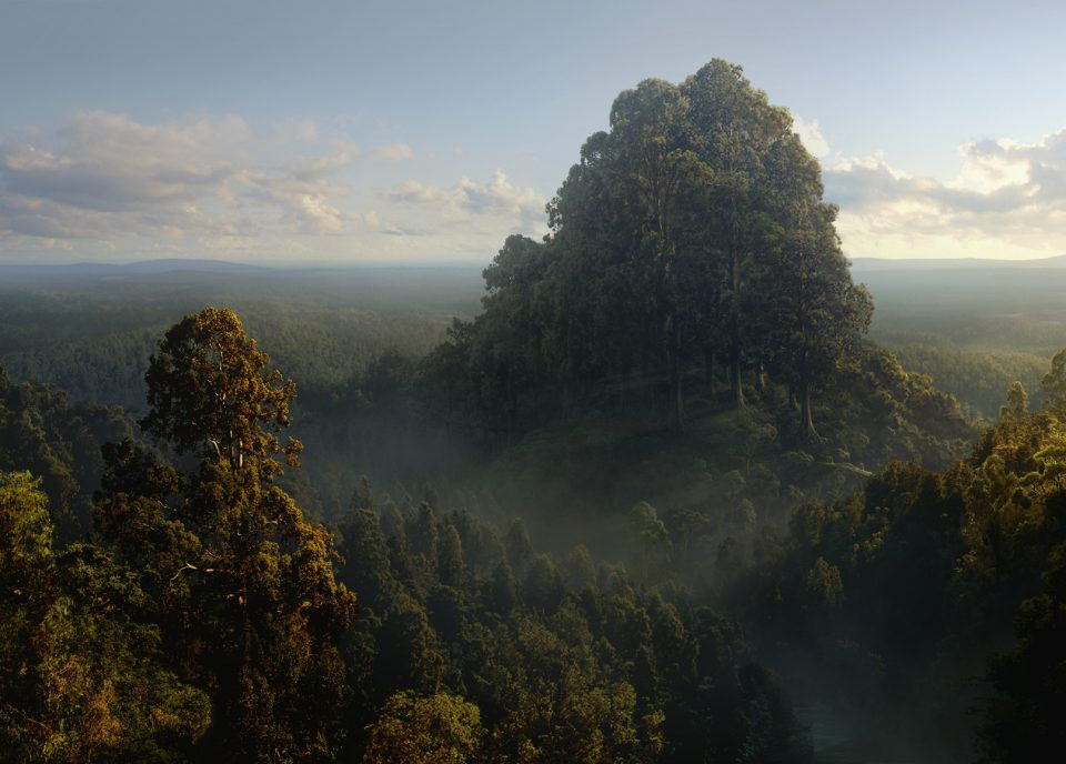 digital-painting-dusso-forest-peak